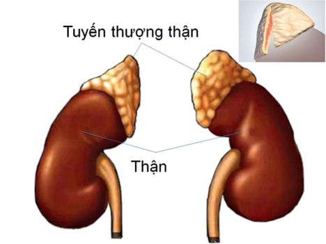 tuyen_thuong_than